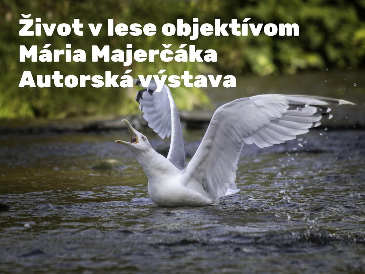 Život v lese objektívom Mária Majerčáka